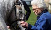 Jocul regilor: Calul reginei Elisabeta este un învingător!