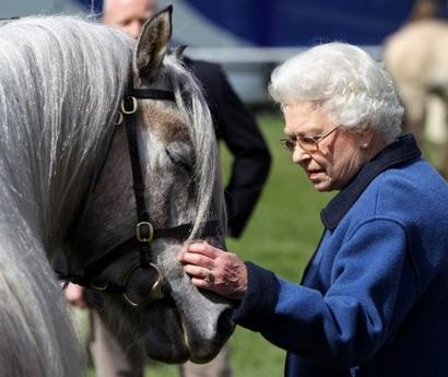 qeii-strokes-one-of-her-horses