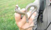 IMPRESIONANT! Ce face un șarpe aflat pe moarte atunci când un om decide să îl salveze