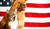 cat and dog with US flag