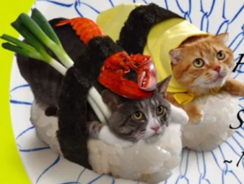 sushicats