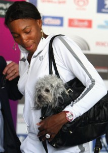 venus-williams-dog-86356399