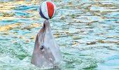 A cerut-o de nevasta ajutat de delfinii de la Constanta!