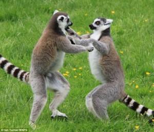 Și animalele pot practica arte marțiale