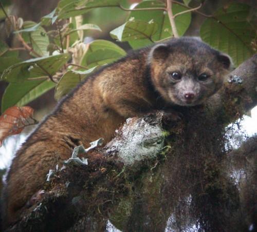 A fost descoperită o nouă SPECIE de mamifere!