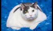 O pisică a mâncat timp de doi ani doar hamburgeri și paste