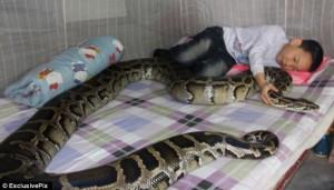 BIZAR. Un copil doarme în pat cu doi pitoni