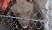 În Ucraina, un pui de urs valorează 750 de euro