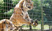 În Costa Rica se desființează grădinile zoologice