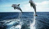 MISTER. De ce mor delfinii pe capete?