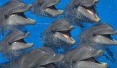 Delfinii pot imita mișcările oamenilor chiar și cu ochii acoperiți