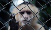 Închiderea grădinilor zoologice naște controverse