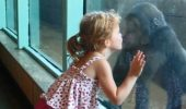 O fetiță îi dă un pupic unui pui de gorilă. VIDEO
