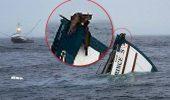 Două pisici au fost salvate înainte de scufundarea unui vas