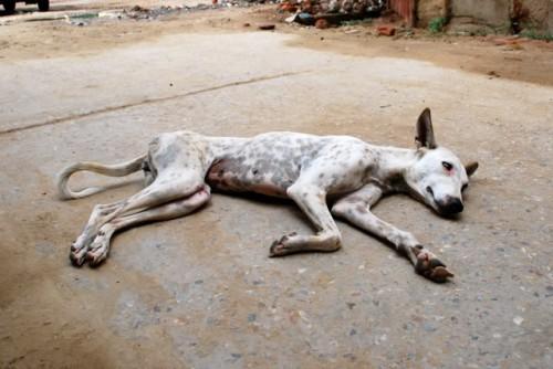 A văzut un câine pe moarte şi a acţionat incredibil de greşit! A considerat că hobby-ul lui e mai important ca viaţa unui animal