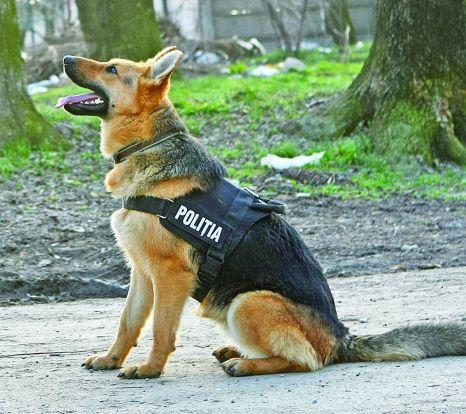 Un hoț a fost anihilat de un câine polițist