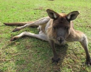 Promovare indecentă a turismului din Australia