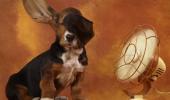 REGULA NR. 1 pe timp de caniculă pentru orice proprietar de câine!