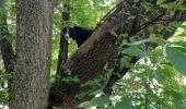Un câine a rămas blocat într-un copac timp de trei zile