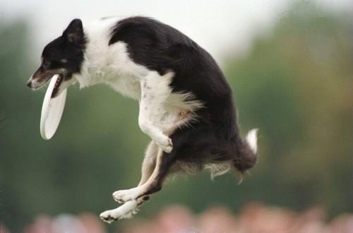 Miturile despre dresaj distrug relaţia dintre om şi câine!