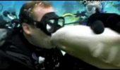 S-a apropiat prea mult de un rechin și a regretat gestul