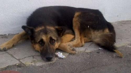 Câinele lui Jean Constantin agonizează în portul Constanța