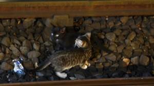 Metroul din New York, blocat din cauza pisicilor