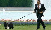 ȘASE reguli ca să nu ai probleme când ieși cu câinele în parc