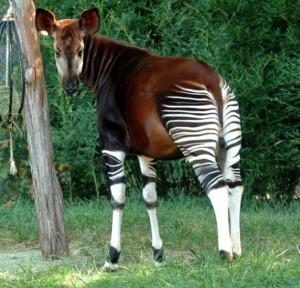Cele mai CIUDATE ANIMALE descoperite VREODATĂ