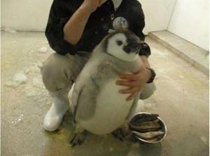 pinguin_42083200