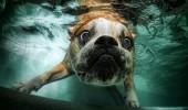 Lumea subacvatica