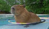 Tu nu ai voie in piscina mea, deci inceteaza cu rugamintile!