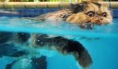 Nu face poza sub apa!