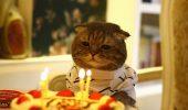 Miau aniversar. Astăzi este ZIUA INTERNAŢIONALĂ A PISICILOR! Povestea felinelor: de la DIVINITATE, la AGENT al RĂULUI