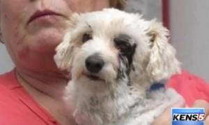 Un câine şi-a pierdut un ochi după ce a salvat o fetiţă de la MOARTE