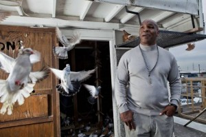 """Bestia"" Mike Tyson iubește porumbeii"