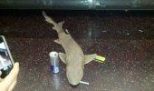 Un rechin mort a fost găsit la metroul din New York