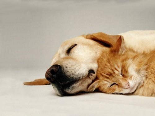Iată cei mai amuzanţi câini care îşi fac siesta