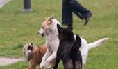 De ce e importantă deparazitarea externă și internă la câine?