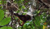 Moment DRAMATIC. Un șarpe boa înghite o maimuță. VIDEO