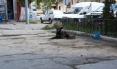 """Consilierii generali au votat: REFERENDUM PENTRU EUTANASIERE PE 6 OCTOMBRIE. Sorin Oprescu: """"Da, am returnat câinii în stradă"""""""