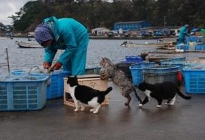 Insula PISICILOR. Locul unde trăiesc mai multe feline decât oameni | GALERIE FOTO