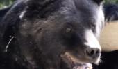 Ursul Max