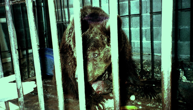 Ursoaica Maya. In numele ei a fost fondat acest sanctuar pentru ursi