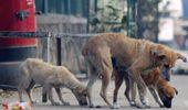 Copilul omorat de caini – Care e parerea ta?