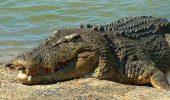 Un bărbat a fost urmărit de un crocodil timp de două săptămâni