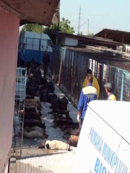 dog shelter in Bistrita, romania