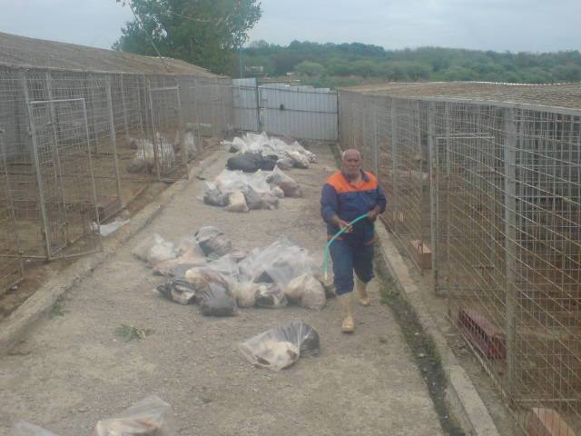 dog shelter in romania