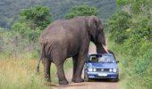 Un elefant a atacat un grup de turiști