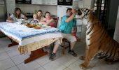 O familie din Brazilia crește șapte tigri